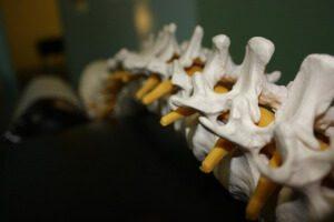 kręgosłup - model